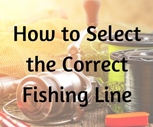 How to select the best fishing line